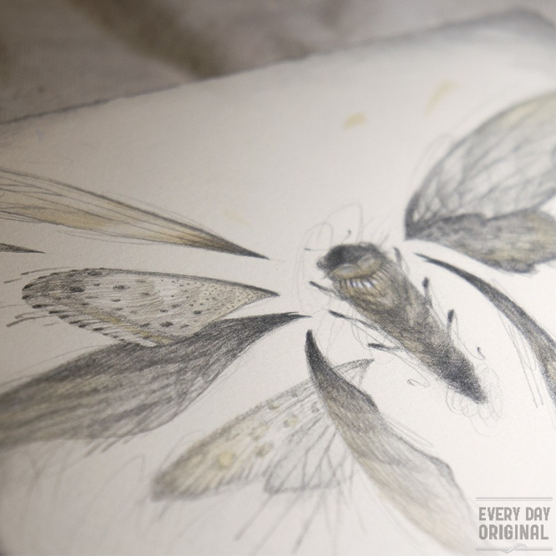 Wings by Rovina Cai