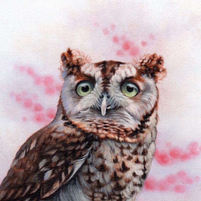 """""""Screech Owl in Winter"""" by Erica Lyn Schmidt"""