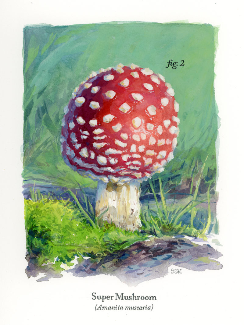 'Super Mushroom' by Primary Hughes
