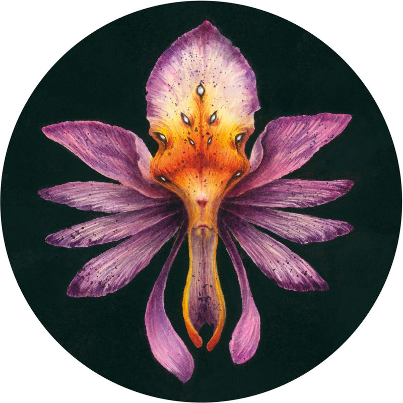 """Orchid Faery"" by Iris Compiet"