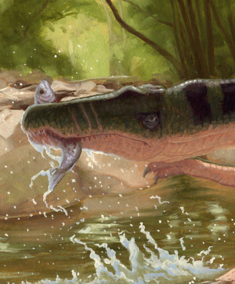 Detail of Baryonyx by Owen William Weber