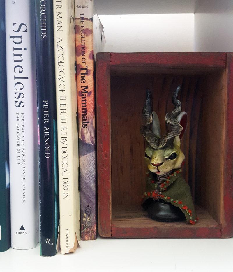 Kaspar on bookshelf