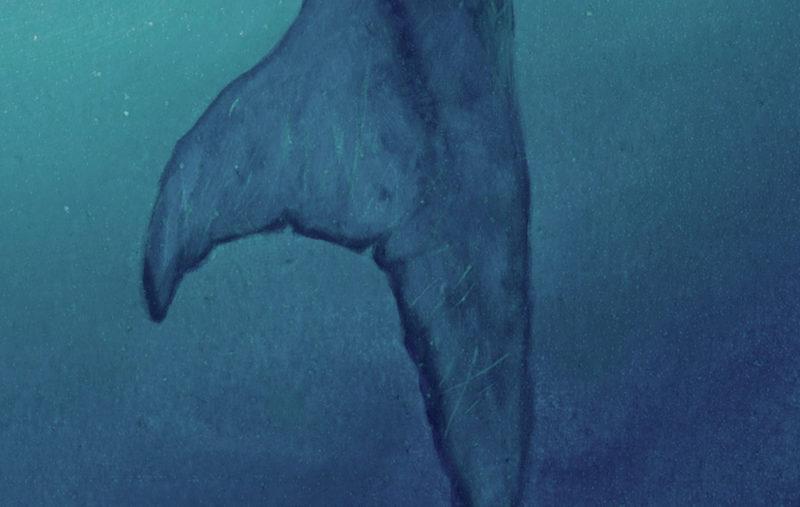 Detail 3 of Mosasaurus by Owen William Weber