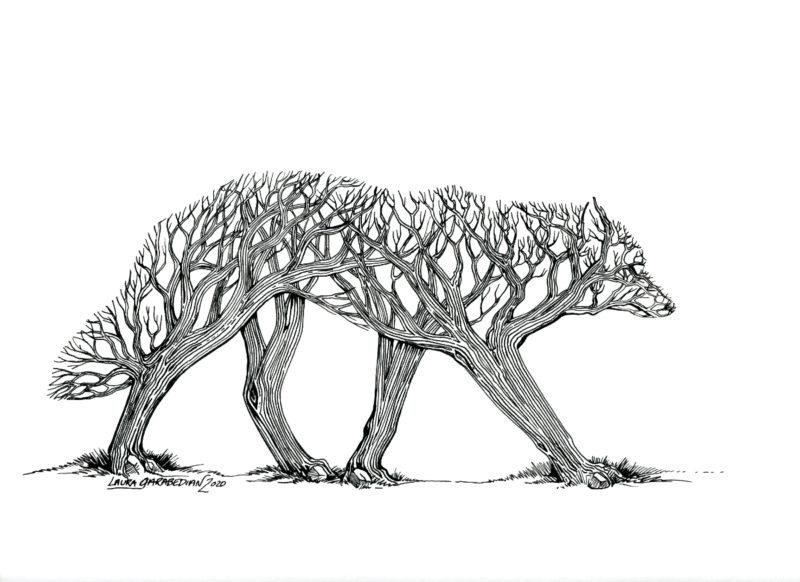 Canis Deciduous