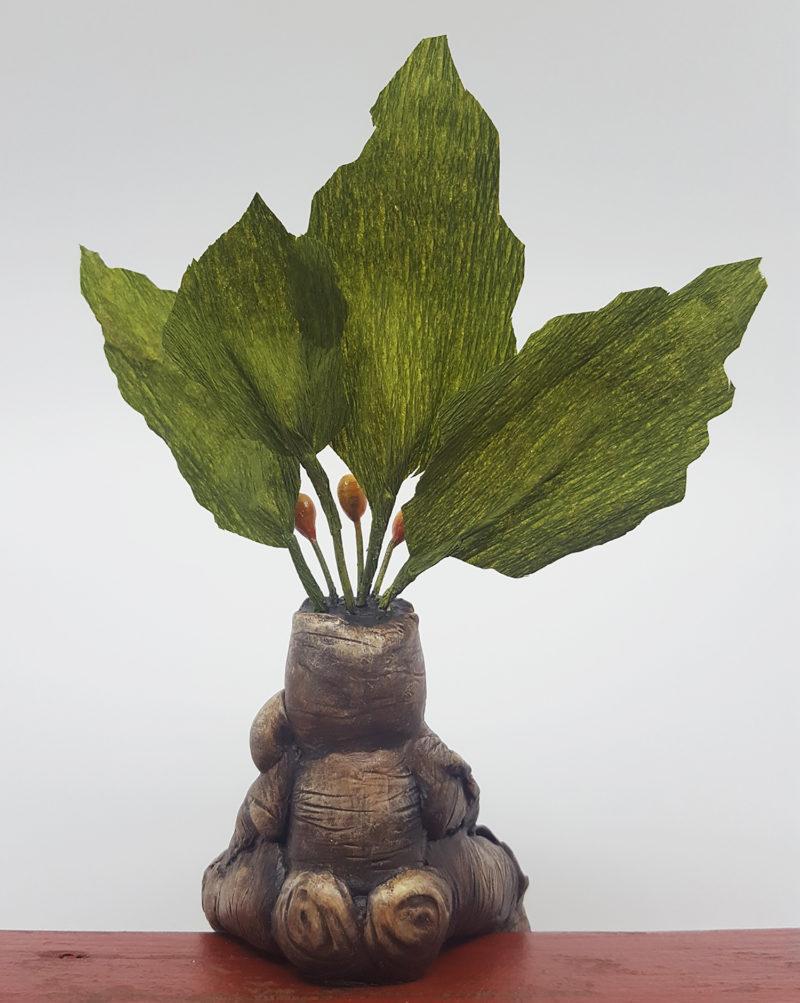 Mandrake Back