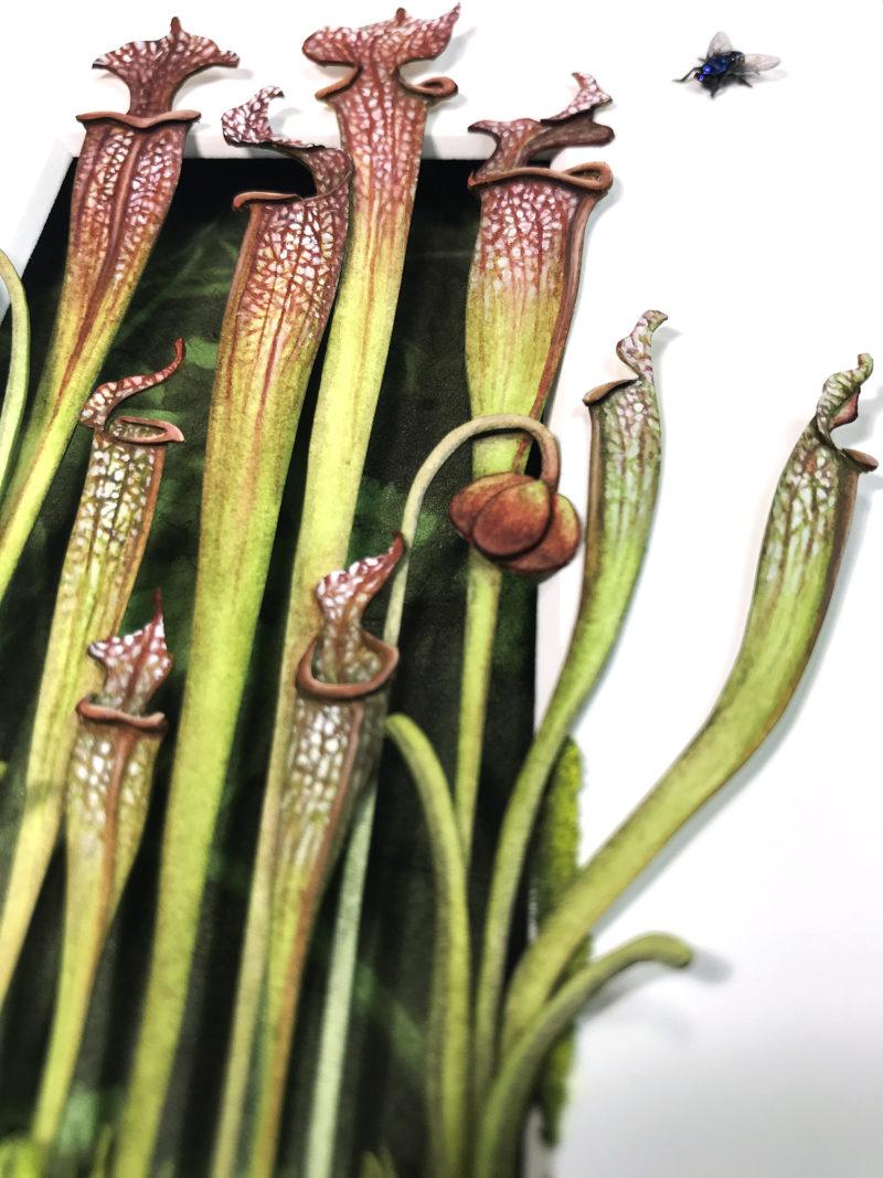 Pitcher Plant Details