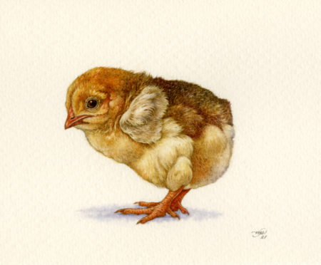 'Chick' by Natee Puttapipat