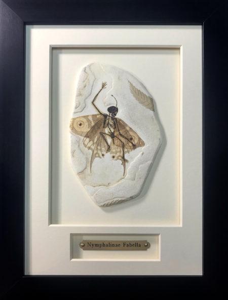 Framed Fairy Fossil